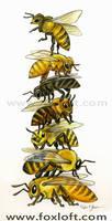 Honey Bee Stack