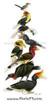 Hornbill Stack