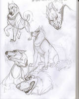 Husky Sketches by Ifus
