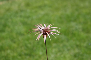Spikey Copper Flower (2) by JustJ20