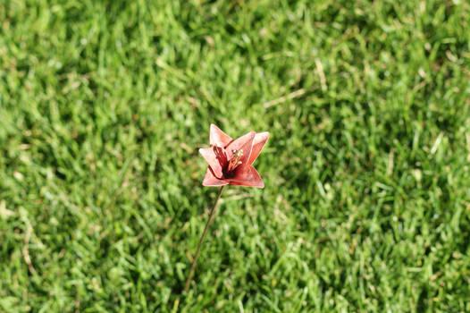 Un-named Copper Flower(1)