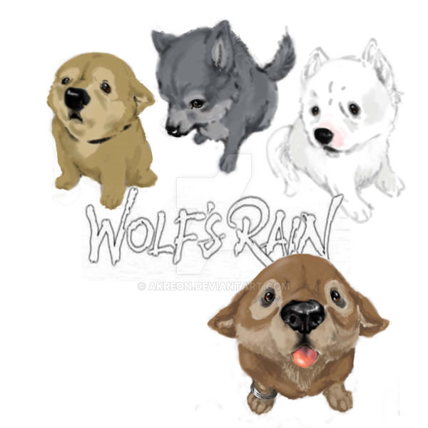 wolf's rain  puppy by akreon