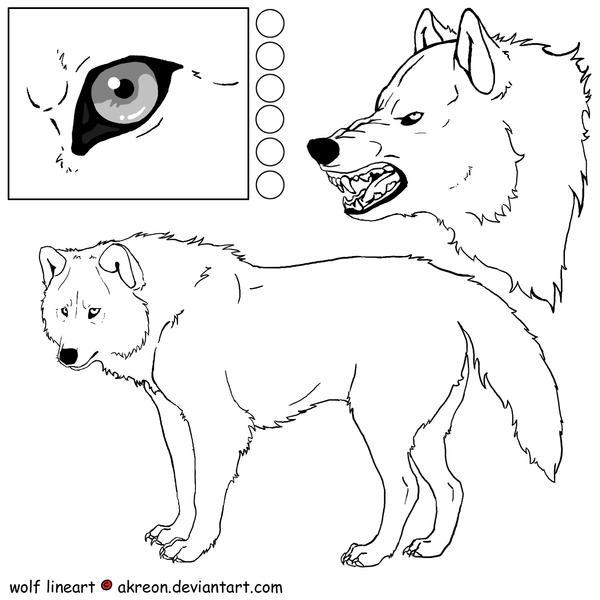 wolf lineart by akreon