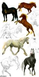 horse studies by akreon