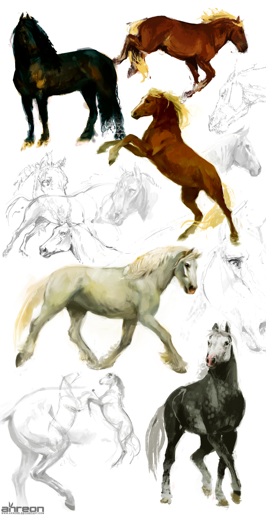 horse studies by akreon