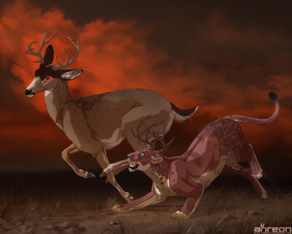 chase by akreon
