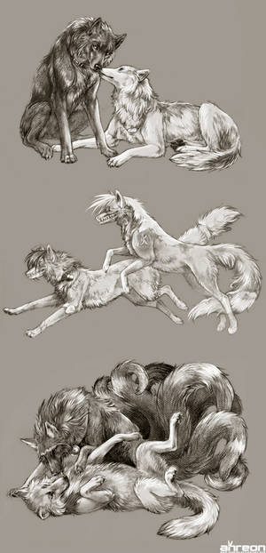 sketch commissions - canines 3