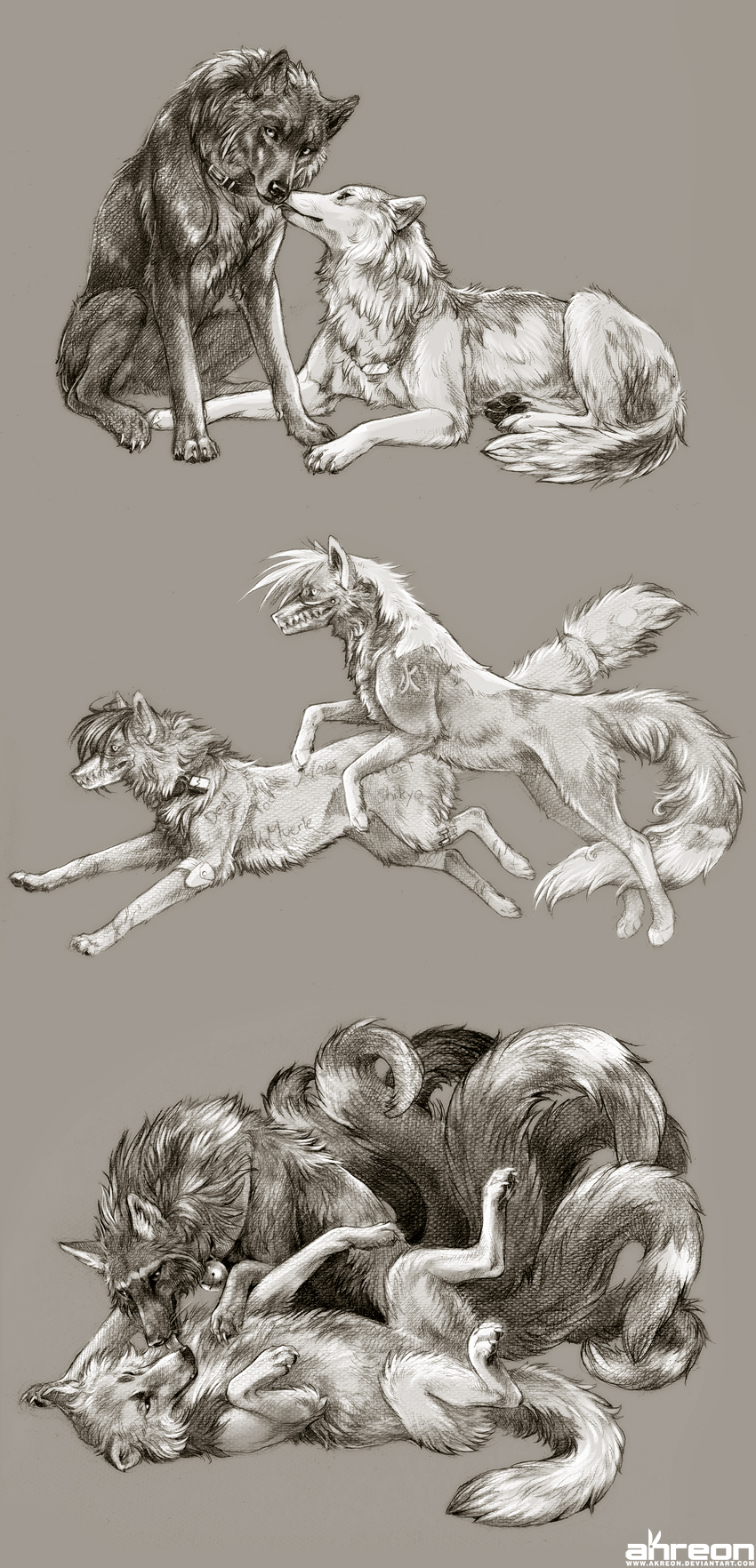 sketch commissions - canines 3 by akreon