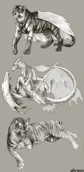 sketch commissions - tiger, dragon