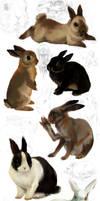 rabbit studies