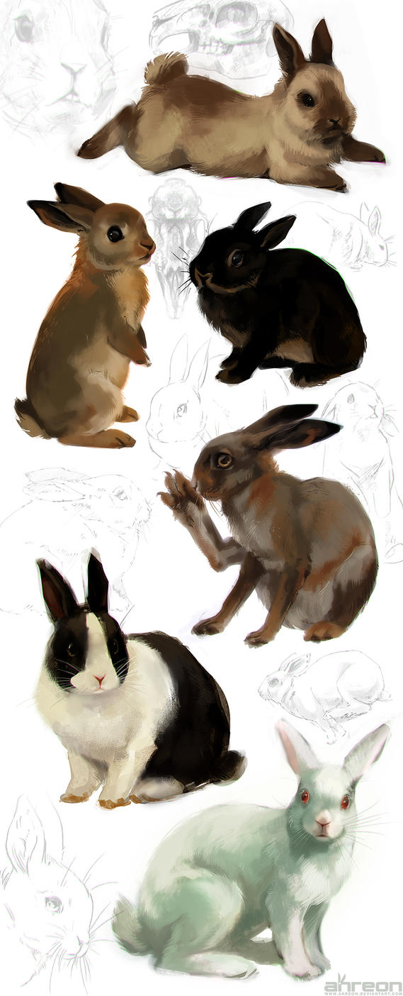 rabbit studies by akreon