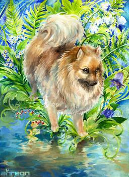 Pomeranian's Garden