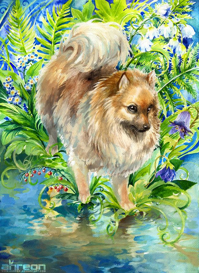 Pomeranian's Garden by akreon