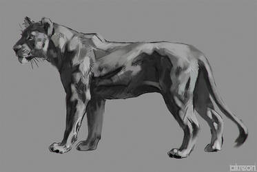 lioness study by akreon