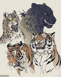 big cats by akreon
