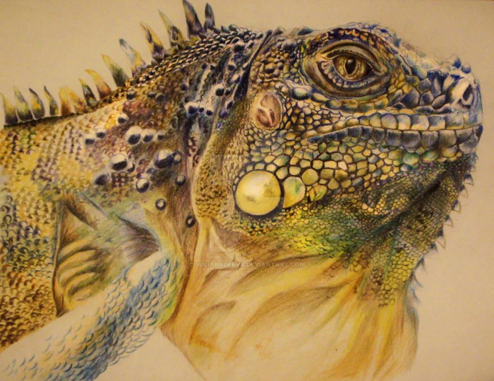 Iguana by JuliaBadeeva