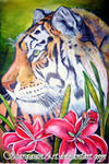 Tiger and Stargazer lilies