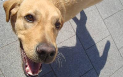 Ridiculously Photogenic dog