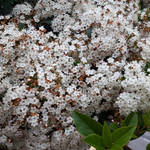 Flowers on the tree vol3