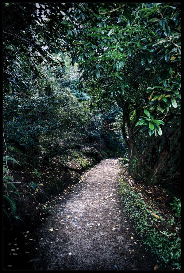 Jungle book by zardo
