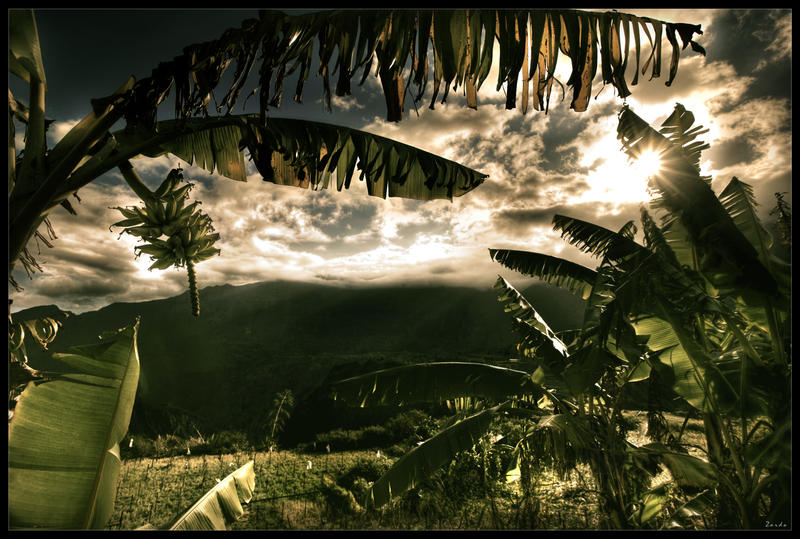 Under banana trees by zardo