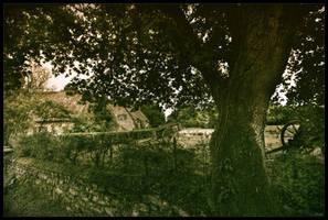Wolf behind the tree by zardo