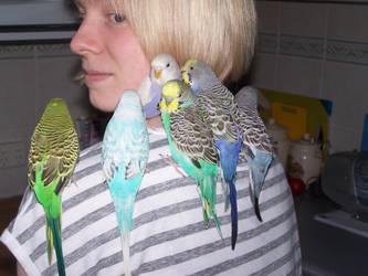 My Little Flock