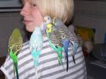 My Little Flock by shadowfallx