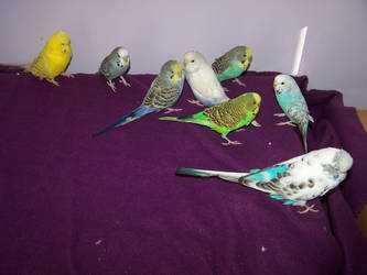 Birdies everywhere!