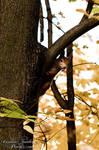 hello squirrel by CaroFiresoul