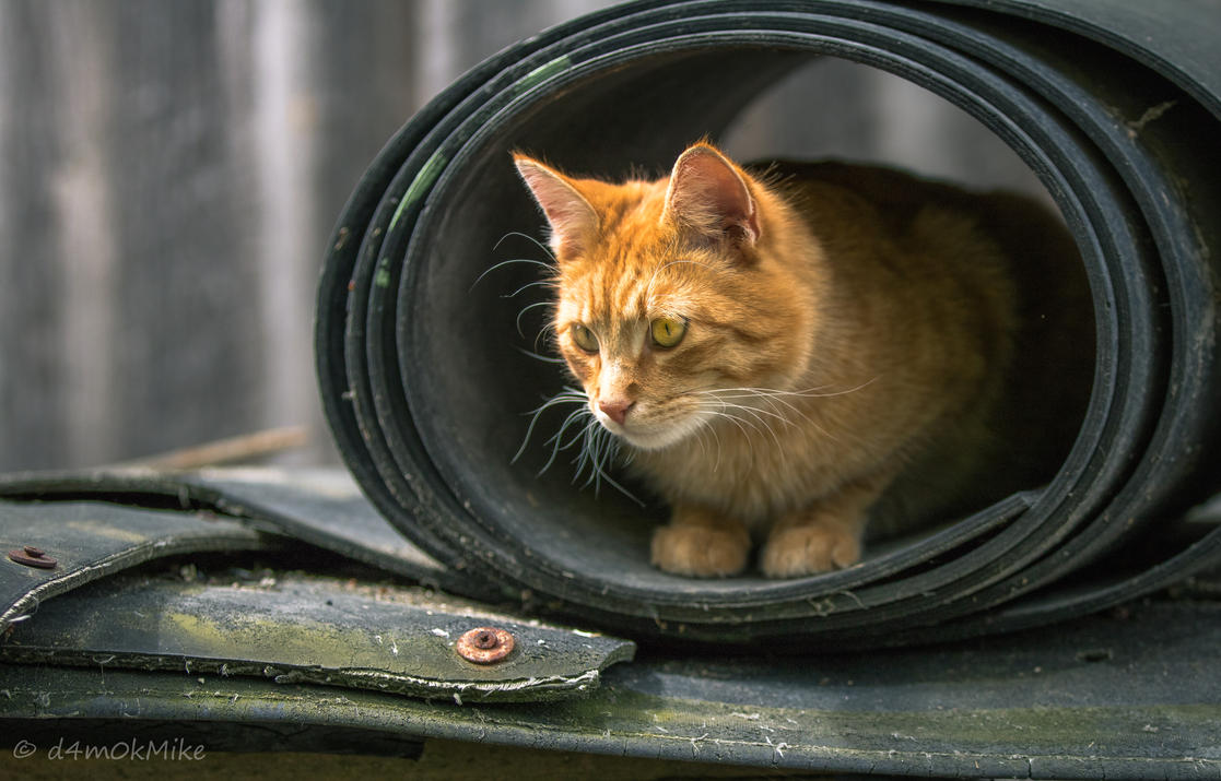 Cat by D4m0k