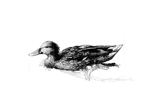 Duck by NecroV