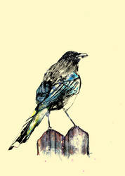 Magpie by GregoryStephenson