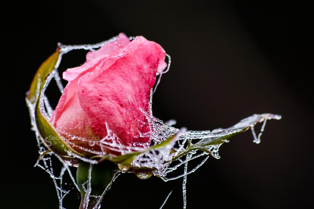 frozen moods by akthuro