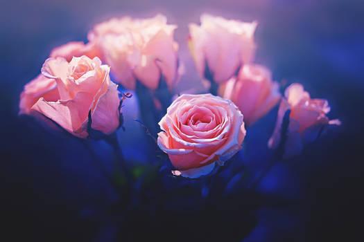 Magical Roses