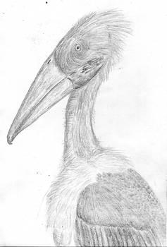 The Titan-stork