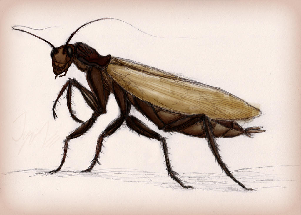 The Mantis-Roach by LazardiK on DeviantArt