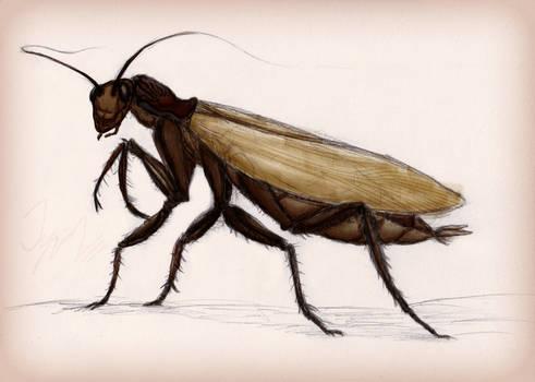 The Mantis-Roach
