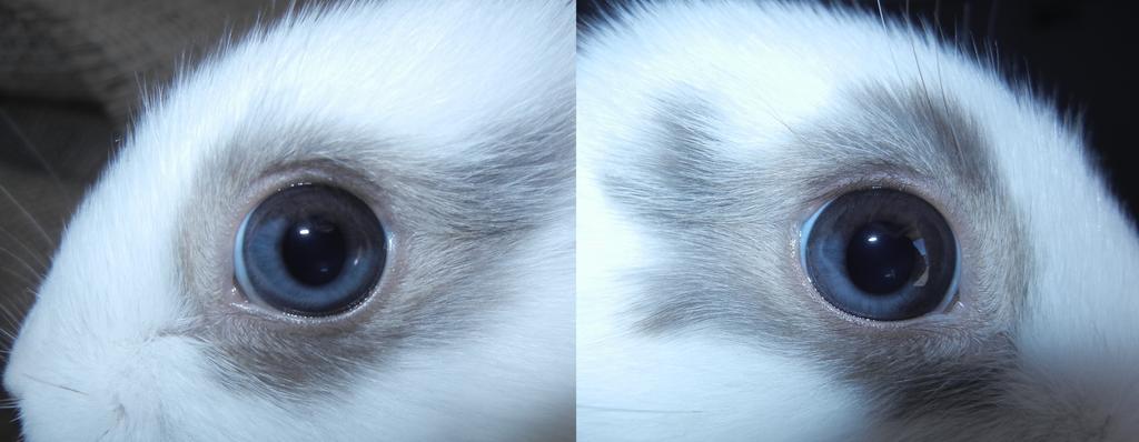 Heterochromia Melody by WinterCosplay
