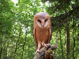 Owl Stock by ValerianaSTOCK