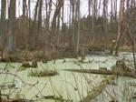 Swamp Stock 4