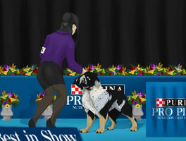 Wearing A Suit to Purina National by Fervious