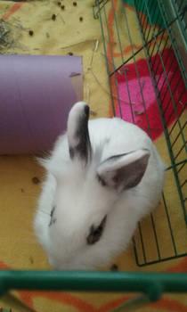 Pajamas the bunny