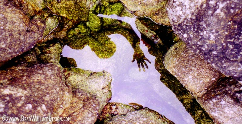 Monterey Reflection