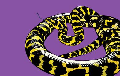 Jungle Carpet Python Print by Passion4Pythons