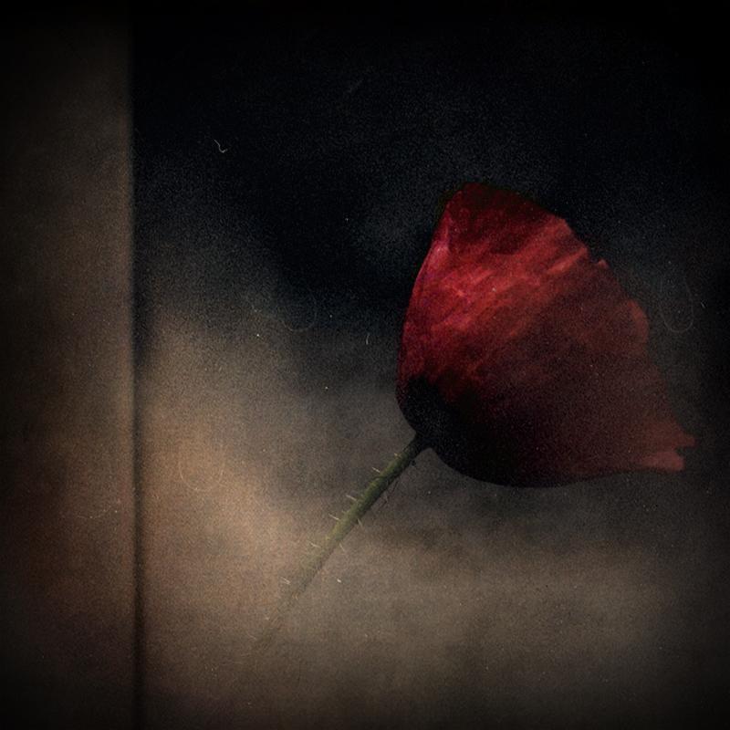 Fotos solitarias