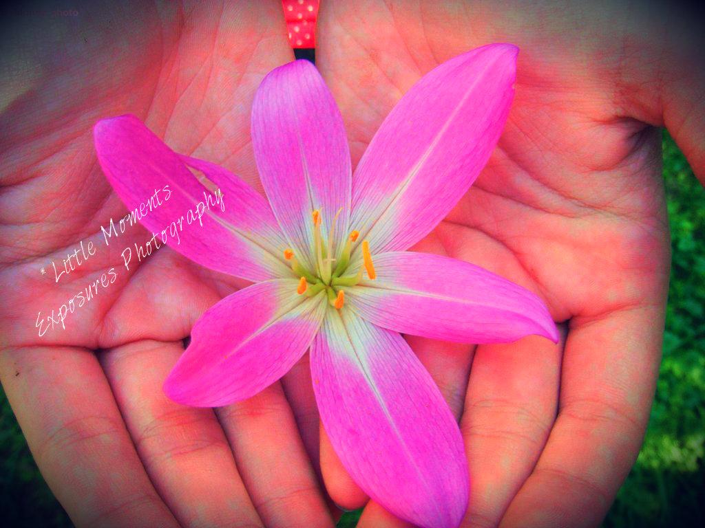 Spring flower by littlemoments86 on deviantart spring flower by littlemoments86 mightylinksfo