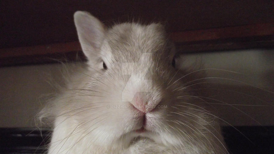Angry bunny by pizzi04 on DeviantArt