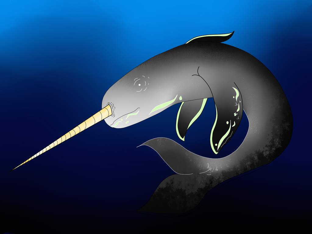 Narwhal by Eromanx898