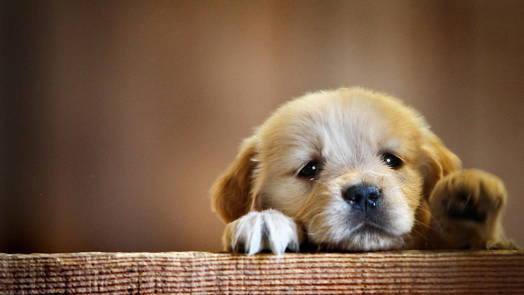Image result for cute puppy
